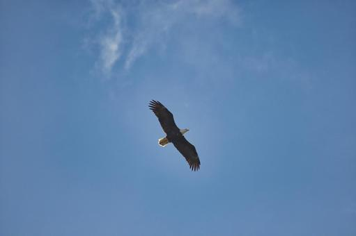 대머리 독수리가 하늘을 나는 곳 뱅크 - 바 - 브리티시 컬럼비아, 캐나다
