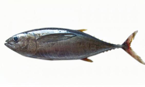 생선 # 4