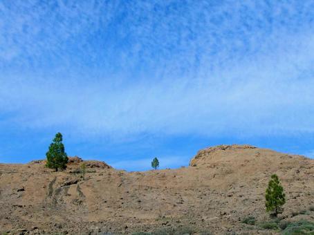 [외국] 침엽수 세 그루 카나리아 제도 하이킹 하늘 자연 식물 풍경 경치