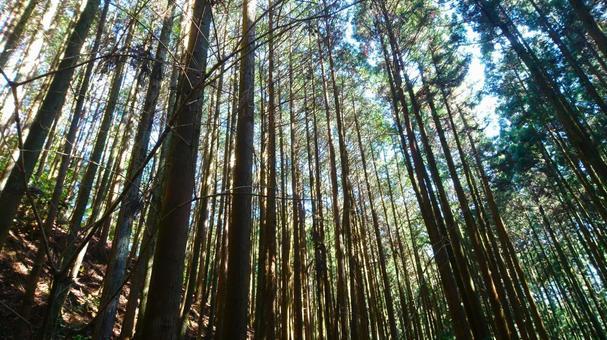 Sugibayashi Forest Forest Sugibayashi