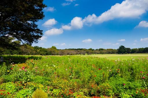 Image of flower field, large lawn, and excursion