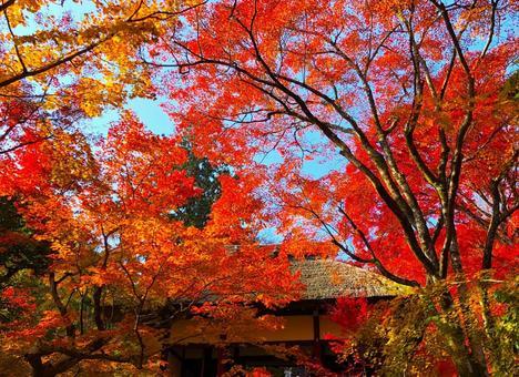 Autumn at Jojakkoji Temple in Okusaga, Kyoto