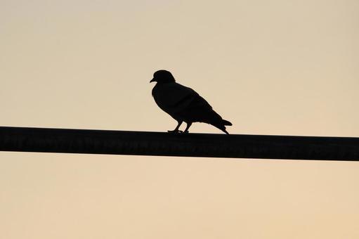 Pakistan bird 17