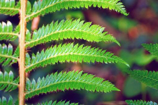 고사리 잎