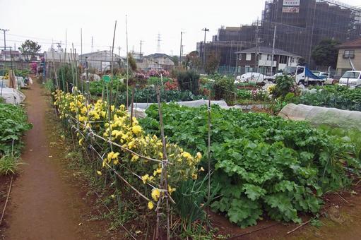 Home garden # 3