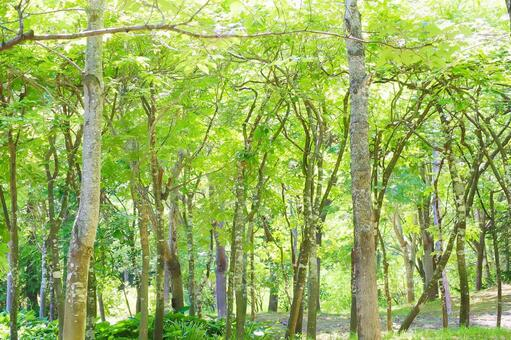Spring Early summer Summer Forest Forest Thickets Natural landscape