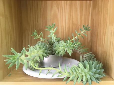 다육 식물 인테리어