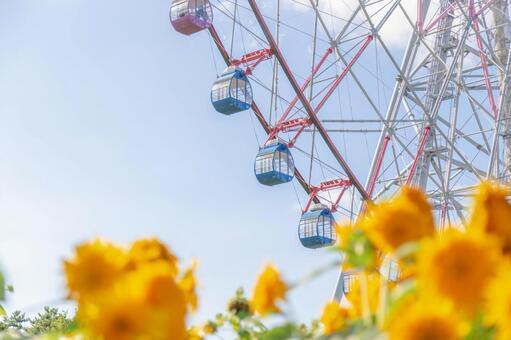 Ferris wheel and sunflower