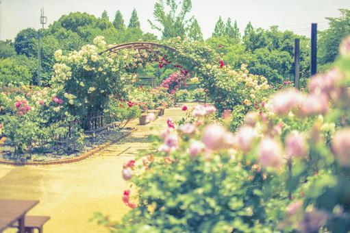 장미 정원 3