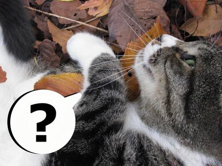 A cat's question