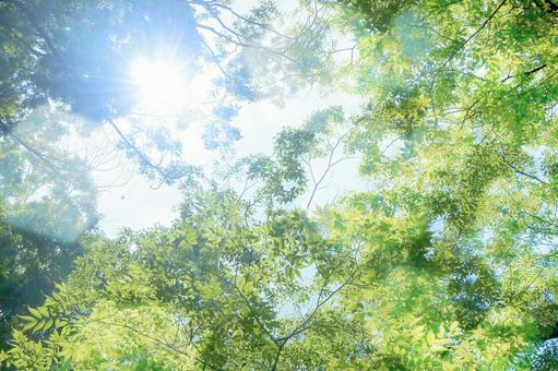 Fresh green sunbeams image   Background material