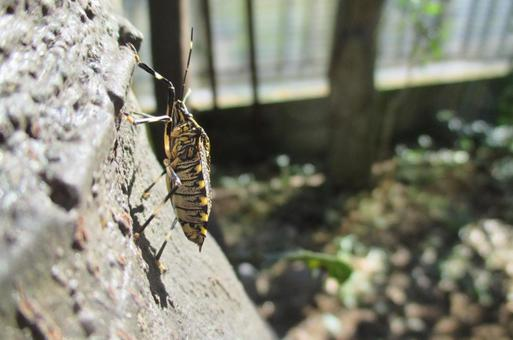 Yellow spotted stink bug