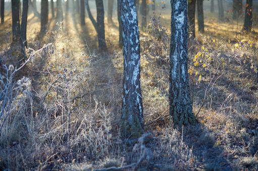 Forest ground 6