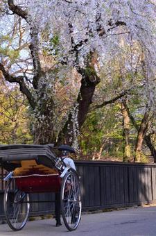 Michinoku's three major cherry blossoms Akita