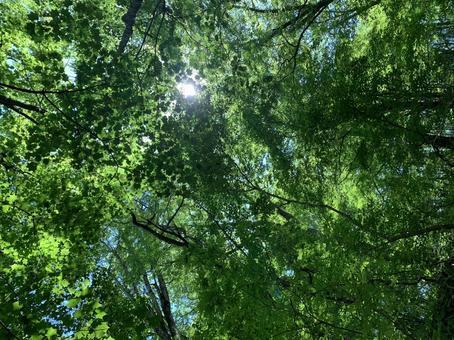 Nature, green