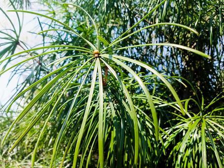 퉁퉁 한 잎있는 자연