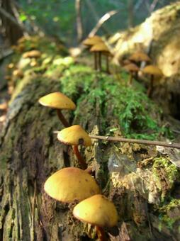 숲의 버섯