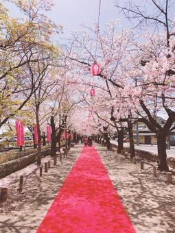 櫻花的方法
