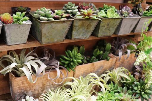 다육 식물 줄기 식물