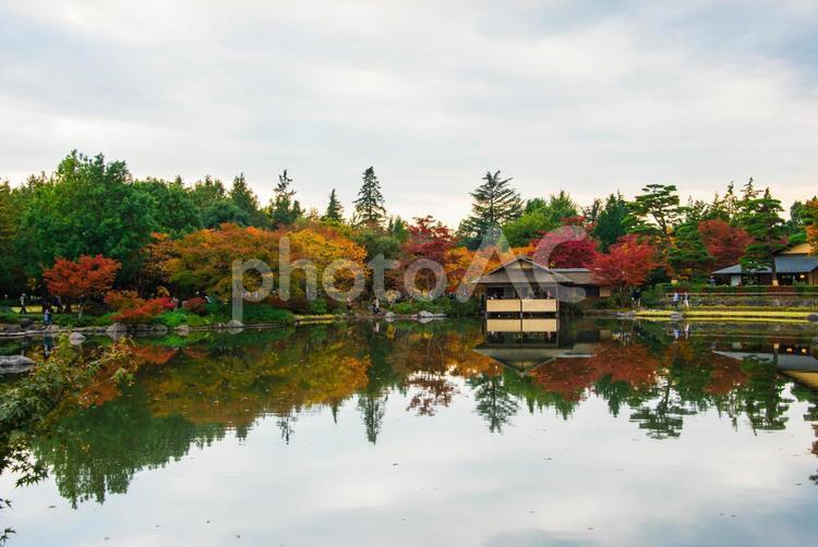 【東京・昭和記念公園】紅葉の写真
