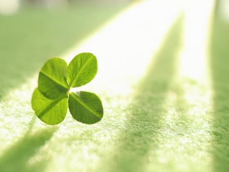 Four-leaf clover Premonition of happiness