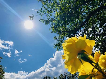 向著太陽綻放的花朵2