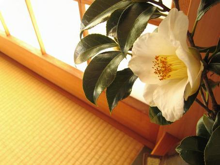 Camellia in Japanese Style 3