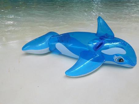 Dolphin float and pool