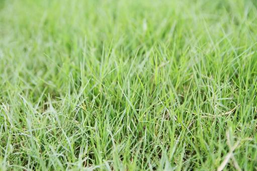 Bushy lawn 03