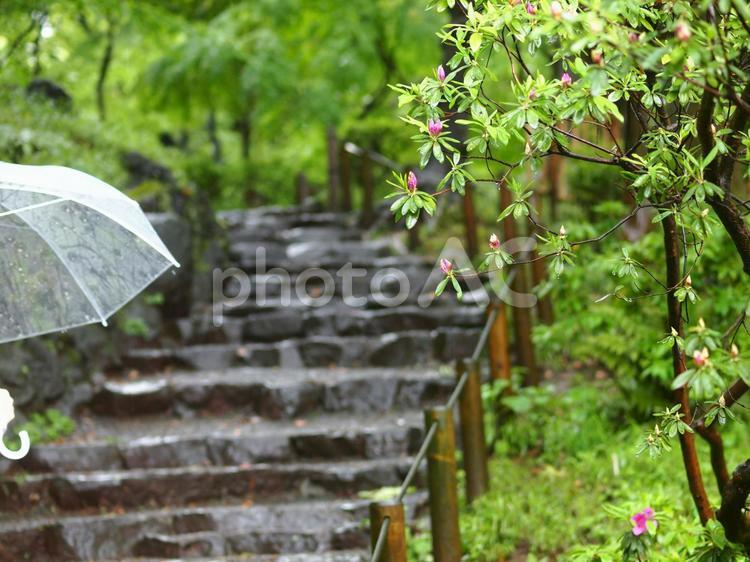 雨の日曜日の写真