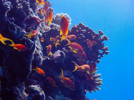 School of coral and red fish
