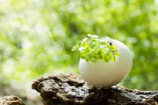 Herbs born from a small egg in the forest _ 1
