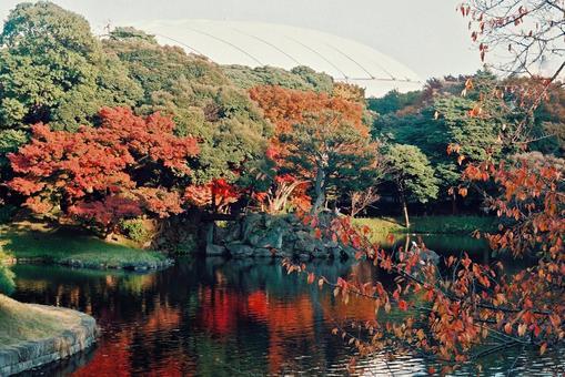 Autumn leaves of Koishikawa Korakuen
