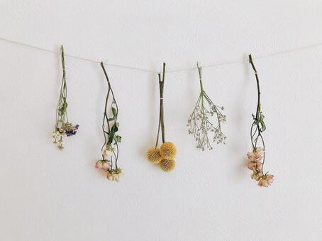 Dried flower 3