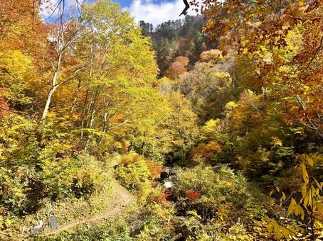 Akita autumn leaves orange trees