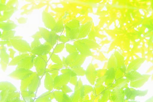 Sunbeams leaves