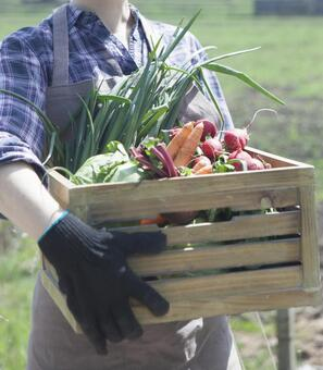 One woman holding a wooden box with vegetables at the farm