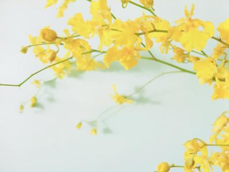 Autumn flowers Oncidium flowers