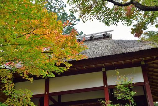 Jōjakkoji Temple Niomon Tomomiji Autumn Leaves 001