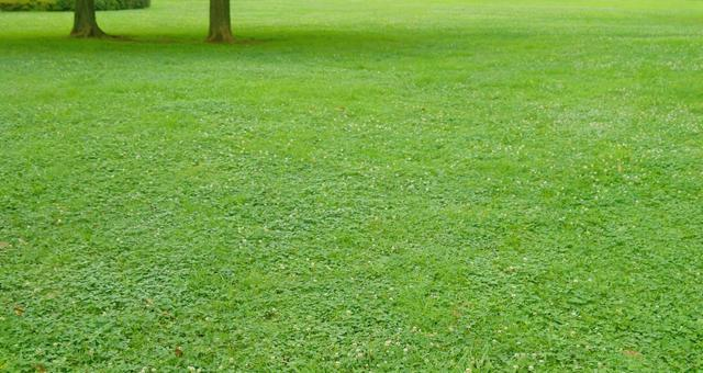 Lawn_background_35