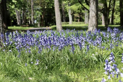 블루 벨 꽃 4