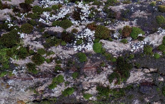 Bark of trees in the Rocky Mountains forests of North America