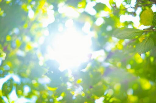 Summer sunshine_leaf_lens blur