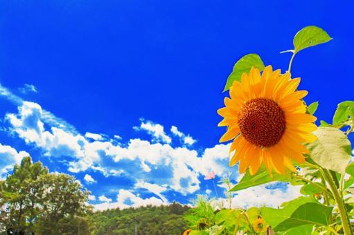 Midsummer Sunflower