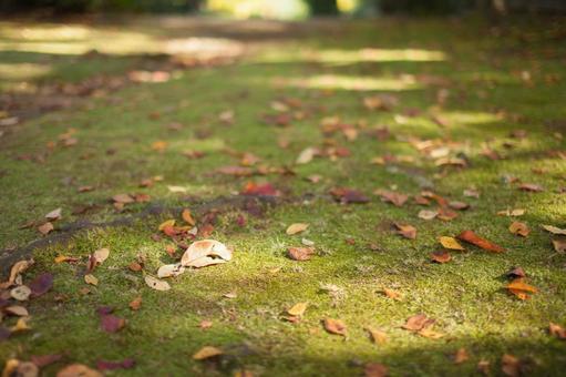 낙엽 11
