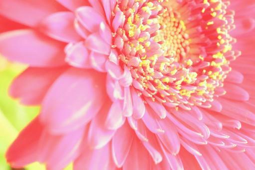 Background flower background flower background material flower background background image flower background flower up red