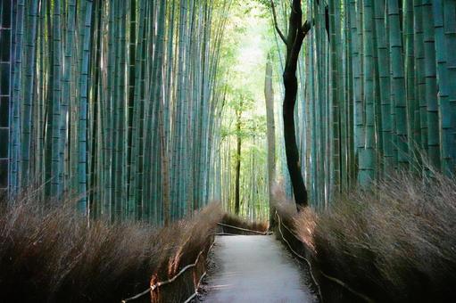 Scenery of Arashiyama, Kyoto Small diameter of bamboo forest where light shines