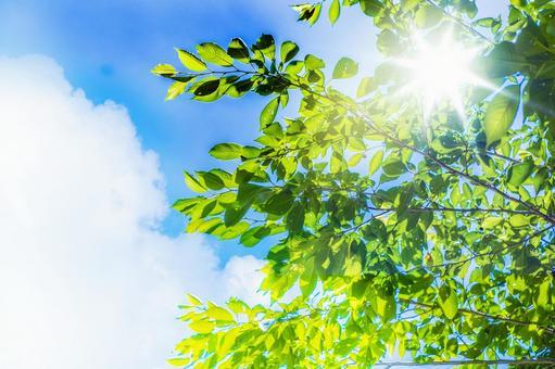 Summer sky_fresh green_summer clouds