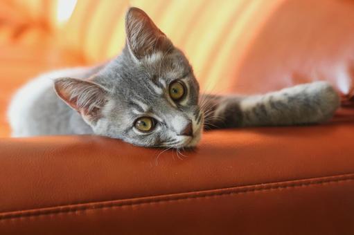 Kitten relaxing on the sofa