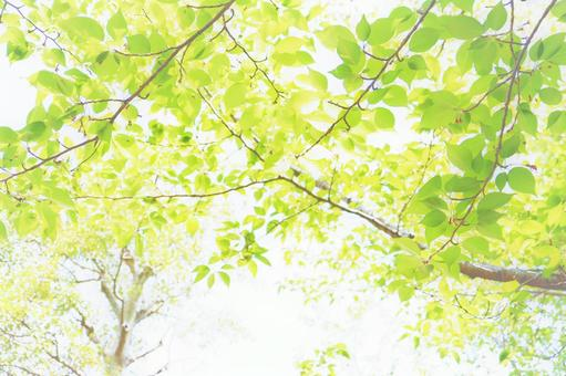 Green leaves and glitter sunbeams background material texture wallpaper image sunbeams green summer